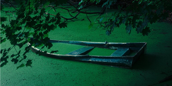 Abandoned boat covered in algae